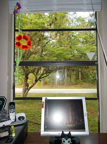 The view from my desk. I love to look out at that tree. :)